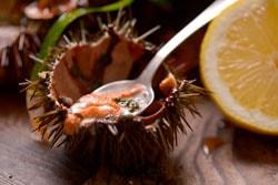 Oricios, el saludable manjar del Cantábrico