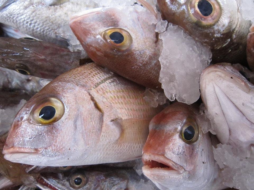 Resultado de imagen para ojos de pescado en supermercado