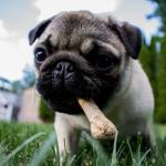 Alimentos tóxicos para los perros que no deberías darles