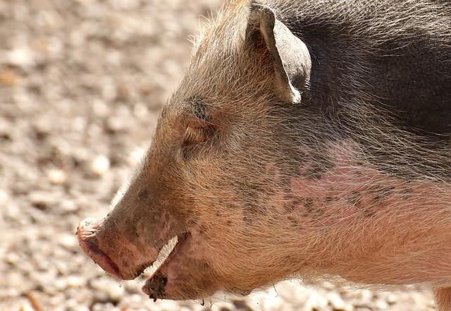 Mitos sobre la carne de cerdo