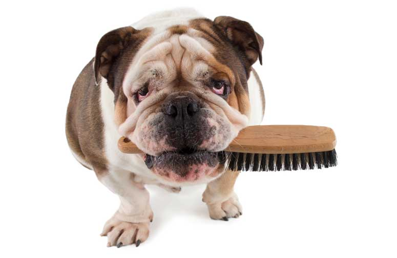 ¿Por qué es importante cepillar a tu perro?