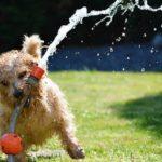 Una mala alimentación puede dañar el pelo de tu perro
