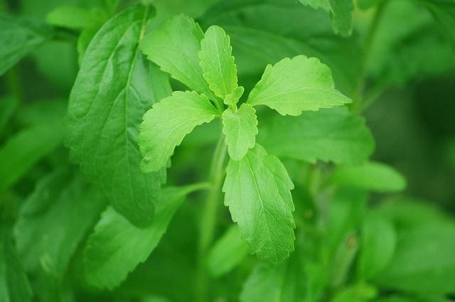 Las ventajas de la stevia