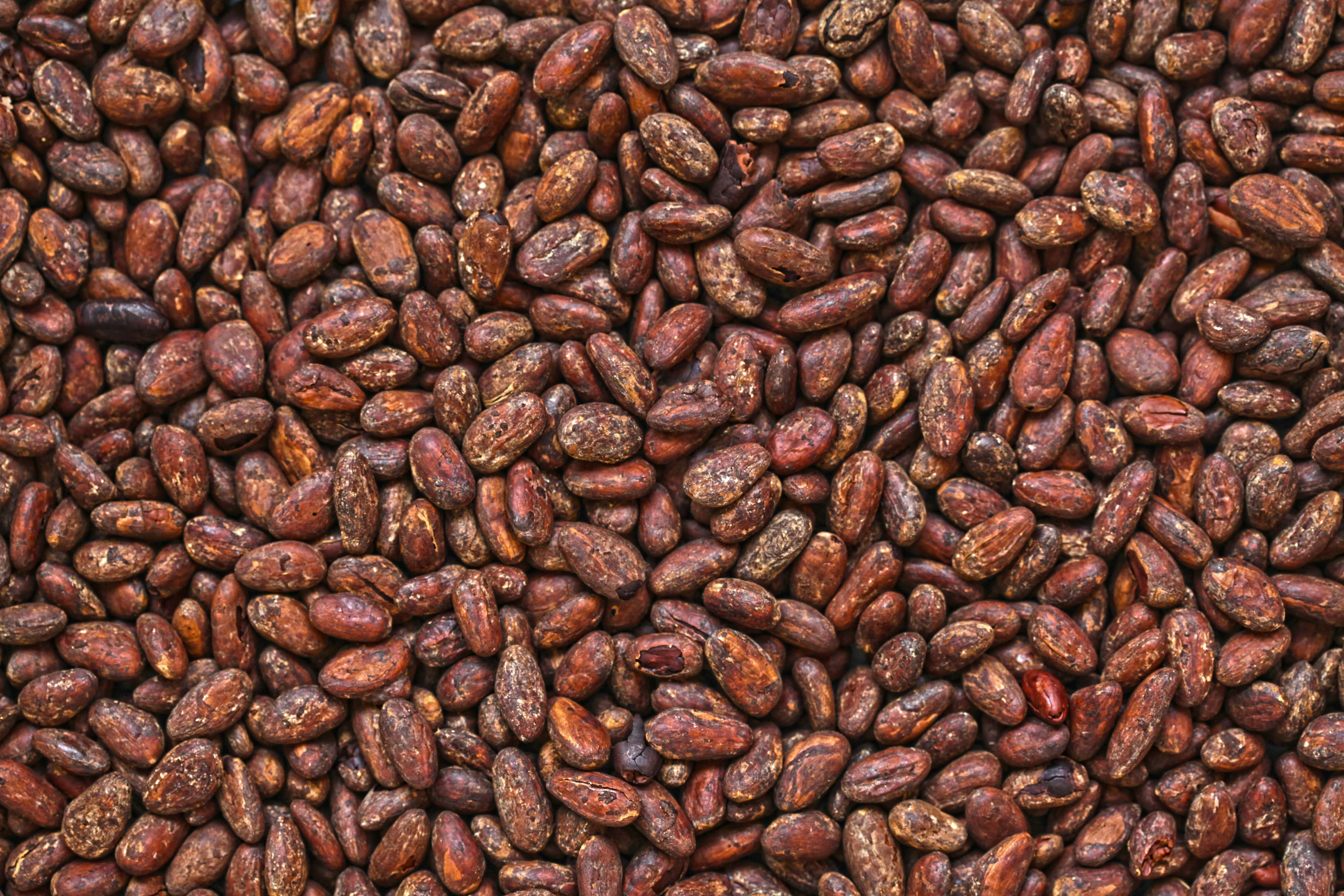 cacao afrodisiaco