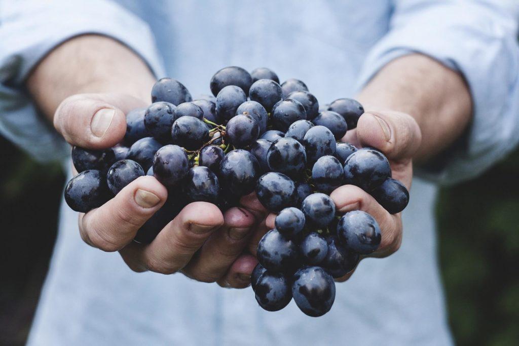 uva fruta de verano