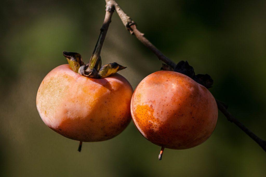 caqui fruta de temporada