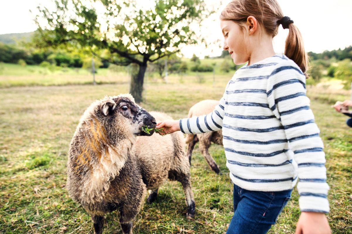 ¿Conoces la relación entre la leche de oveja y la salud de los más pequeños?