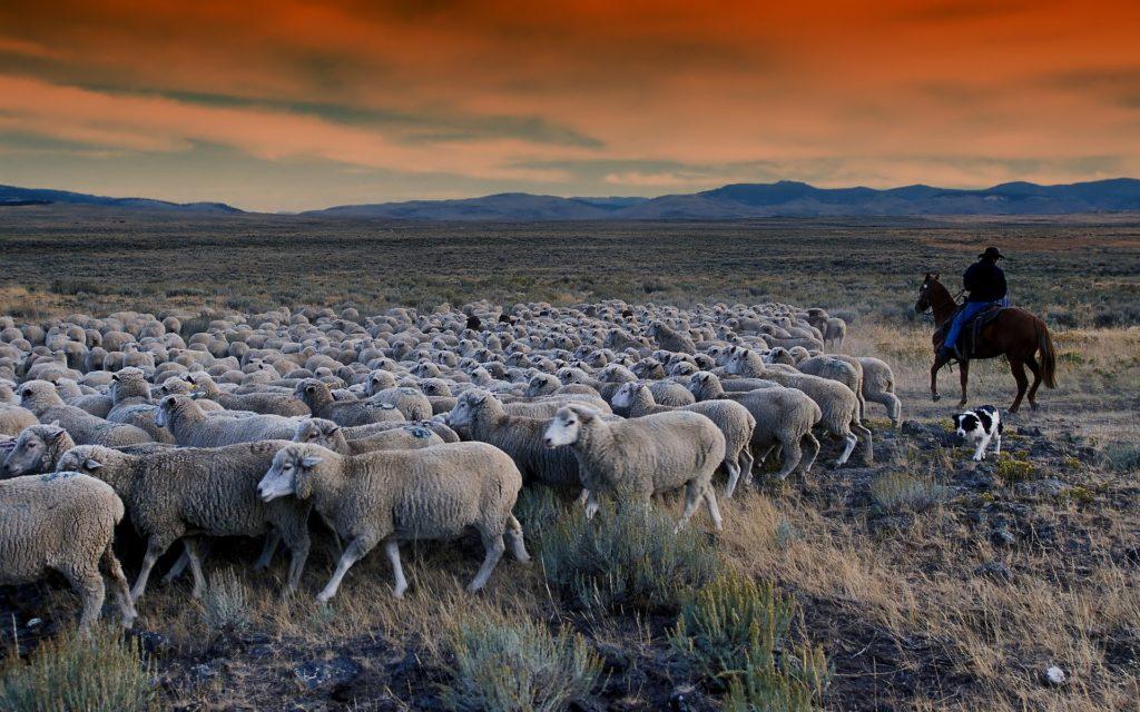 cómo se produce sostenibilidad leche de oveja