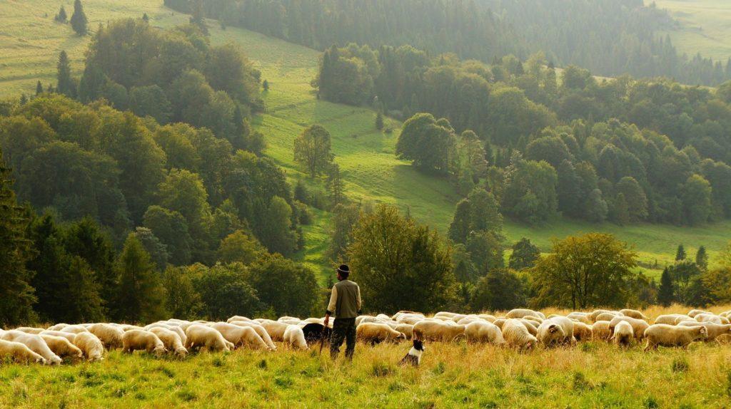 pastoreo sostenible leche de oveja