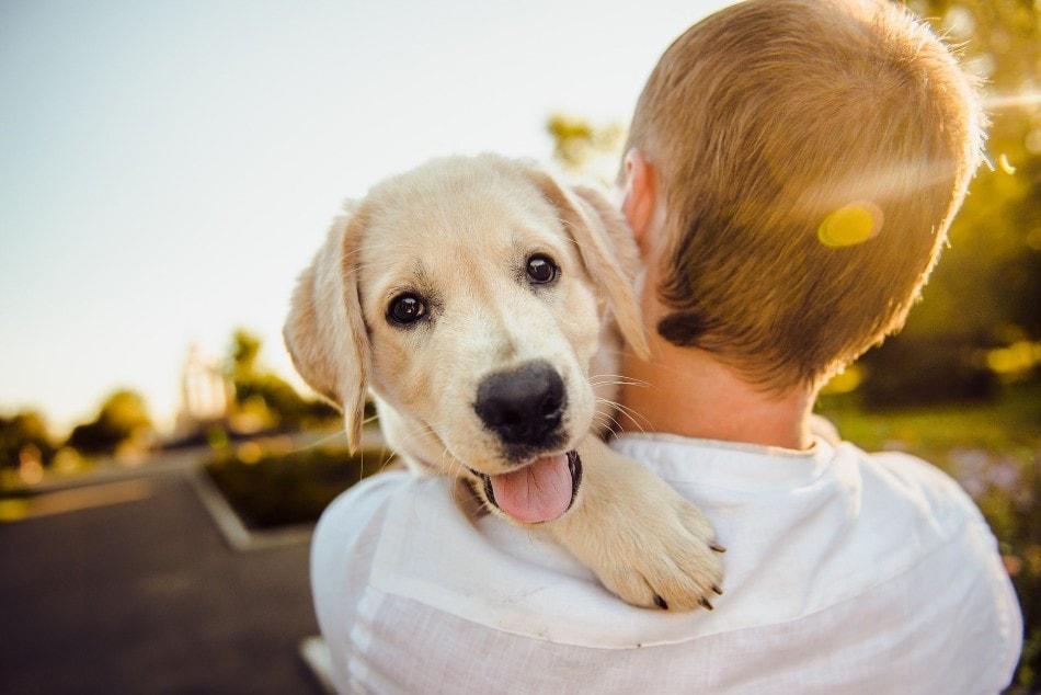 Día Internacional del Perro: agradécele su fidelidad con los mejores cuidados