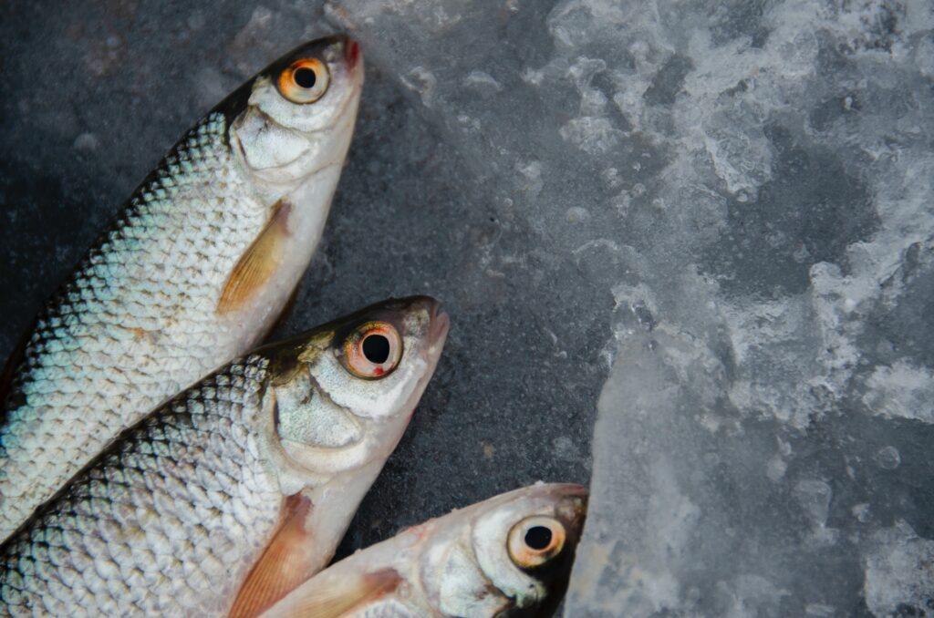 mejora cerebral pescado